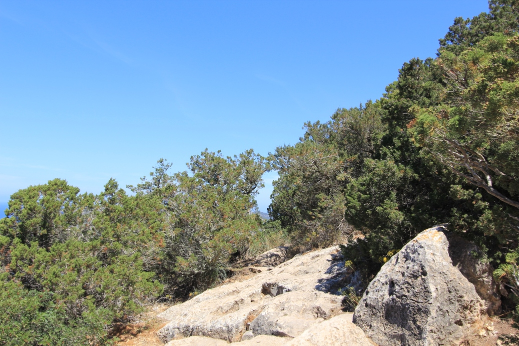 Weg zum Torre d'es Savinar