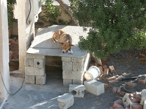 Wachhund im Hinterhof des Hotels