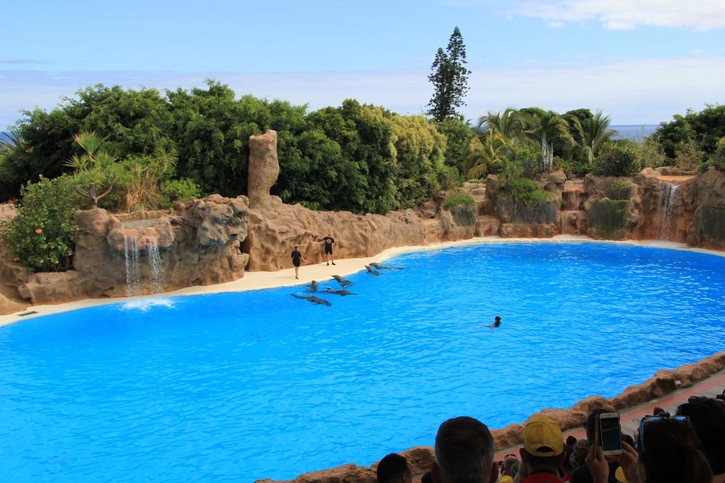 Delphin-Show im Loro Park, Puerto de la Cruz