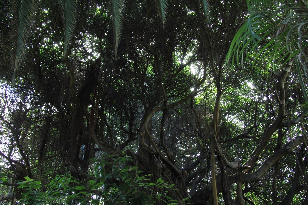 Loro Park, Puerto de la Cruz